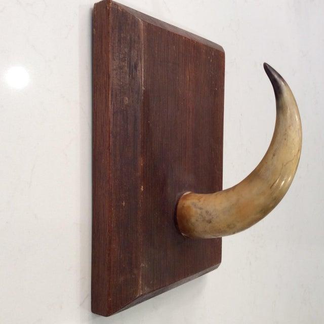 Black Forest Vintage Large Horn Wood Plaque For Sale - Image 3 of 3