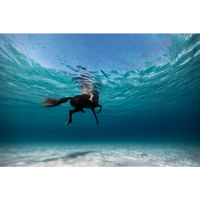 """""""Swimming on a Horse in Menorca"""" Framed Print on Archival Paper by Enric Gener For Sale"""