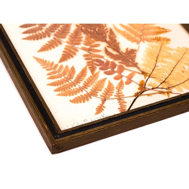 Pressed Fern Wall Hanging - Image 3 of 5