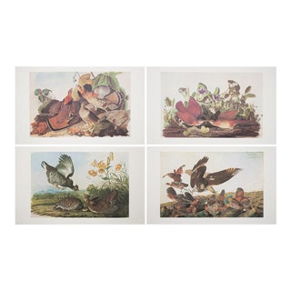 Extra Large Vintage Lithographs of Birds - Set of 4