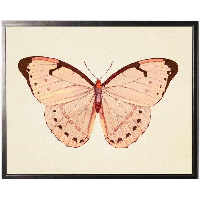 A horizontal pink butterfly 2 print framed in a pewter shadowbox. 25.5x19.5