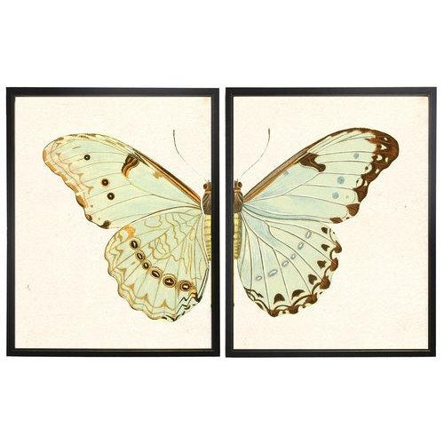Split pale green butterfly in copper and black shadowbox. 2 frames make up this set.