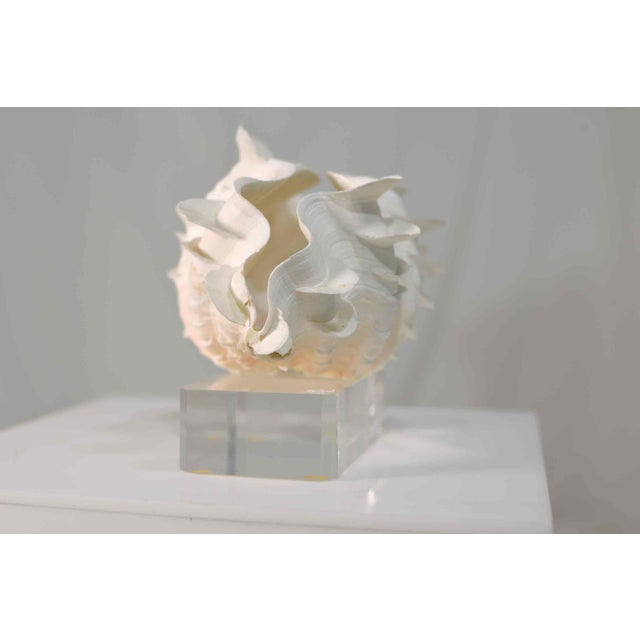 Acrylic Frilled Conch Shell Sculpture on Clear Acrylic Base For Sale - Image 7 of 13