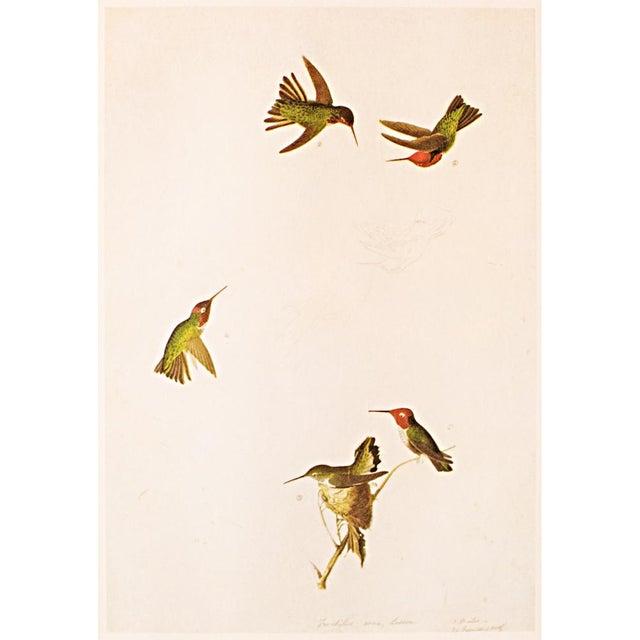 Anna's Hummingbird by John James Audubon, 1966 Vintage Print For Sale In Dallas - Image 6 of 8