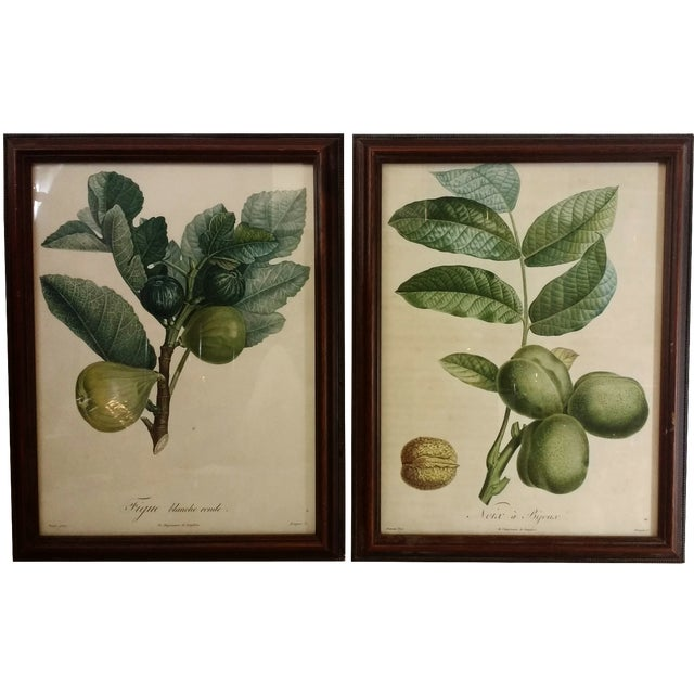 French Botanical Fruit Prints - A Pair - Image 1 of 9
