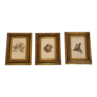 19th Century Pressed Organic Botanicals in Giltwood Frames -Set of 3 For Sale