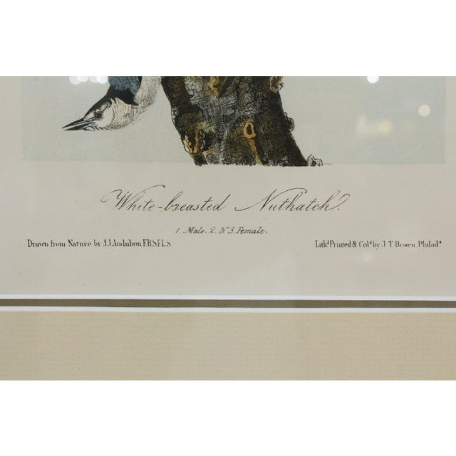 Traditional Mid 19th Century Antique John James Audubon Nuthacth Print For Sale - Image 3 of 5