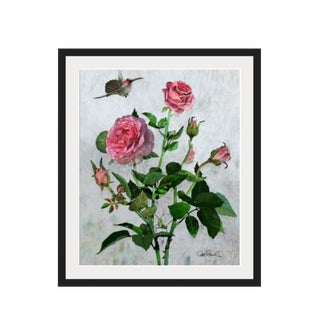 Hummingbird rose, premium Giclee Print. Framed and Matted For Sale