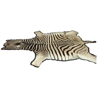 African Burchell Zebra For Sale