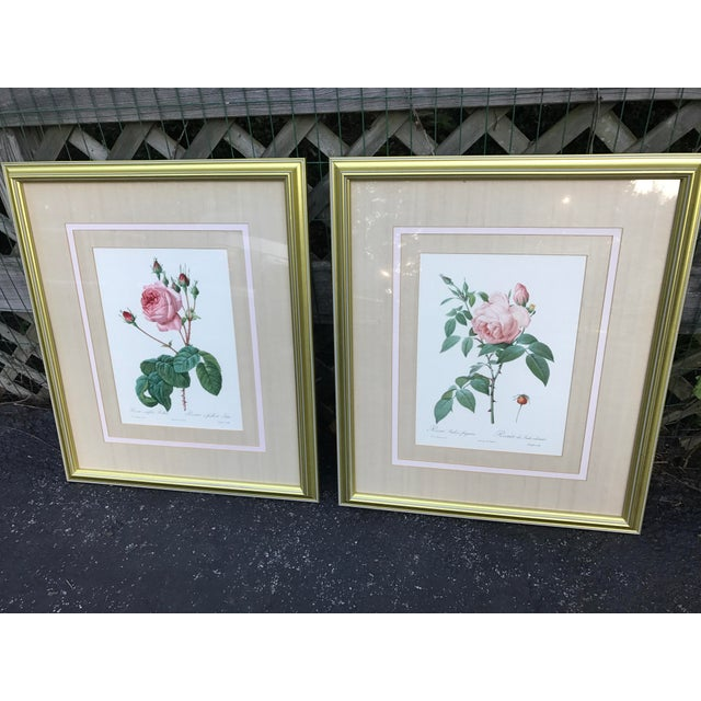 Orange Pierre Joseph Redoute Botanical Rose Large Lithographs - a Pair For Sale - Image 8 of 8