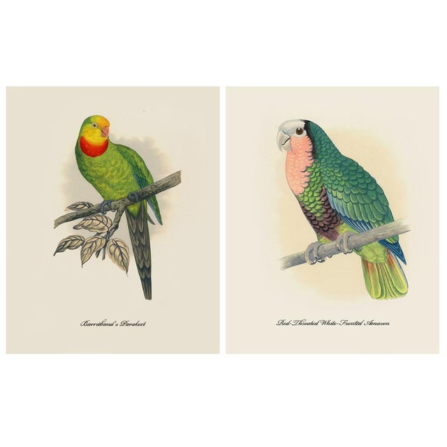 American Classical 1884 Alexander Francis Lydon, Parrot Reproduction - Set of 12, N2 For Sale - Image 3 of 13