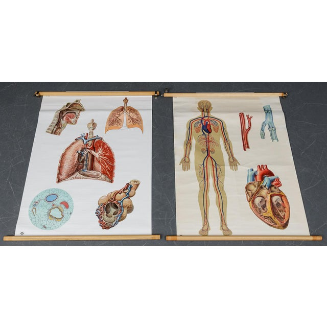 Paper Vintage Circulatory and Respiratory Learning Poster - A Pair For Sale - Image 7 of 7