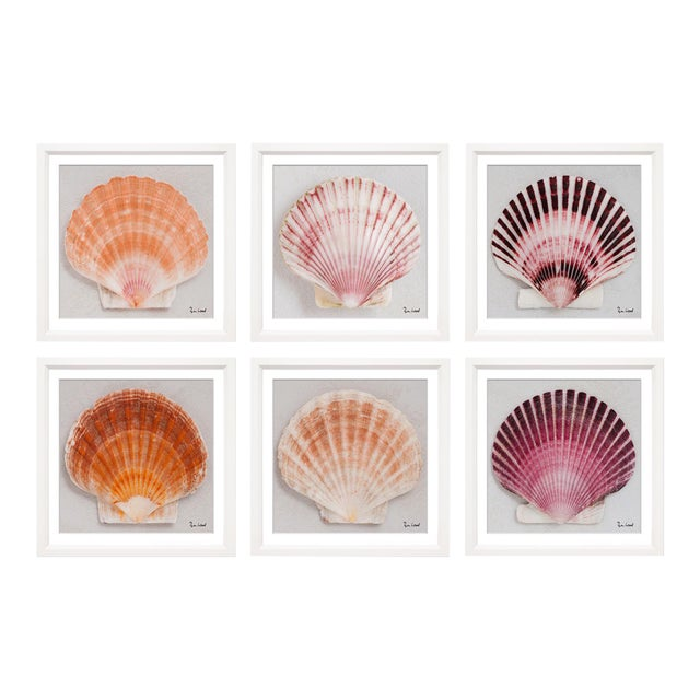 "Trowbridge Giclees ""Shells"" by Ben Wood Set of 6 For Sale"
