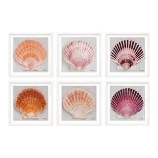 "Trowbridge Prints ""Shell"" by Ben Wood - Set of 6"