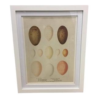 Egg Cream Framed Lithograph For Sale