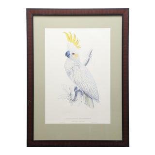 Framed Vintage Reproduction of Edward Lear's Lefser-Crested Cockatoo For Sale