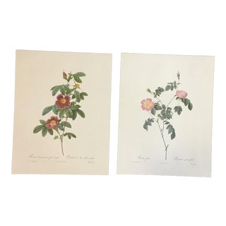 Pair of Pink and White Botanical Prints After Pierre-Joseph Redouté For Sale