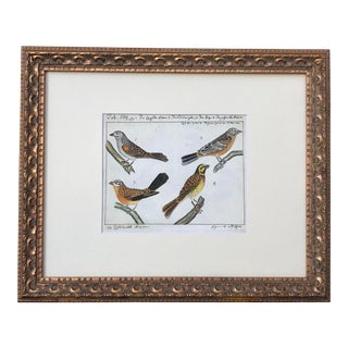 Antique Original Watercolor Birds Ornithological Study 18th Century For Sale