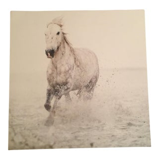 Solo Surf Horse Print Poster For Sale