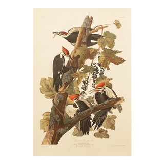 1990s Pileated Woodpecker by Audubon, Large Cottage Print For Sale