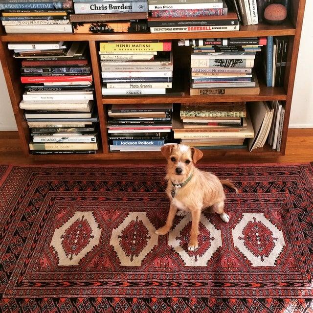 Bokhara Persian Wool Rug - 3′2″ × 5′8″ - Image 3 of 5