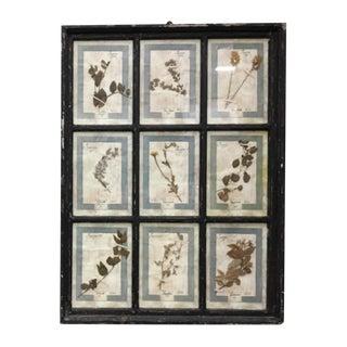 Italian Framed Botanical Herbarium Wall Hanging For Sale