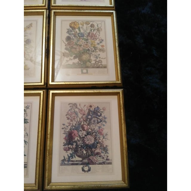 English Traditional Set of 9 Vintage Botanical Prints in Gold Antique Frames For Sale - Image 3 of 8
