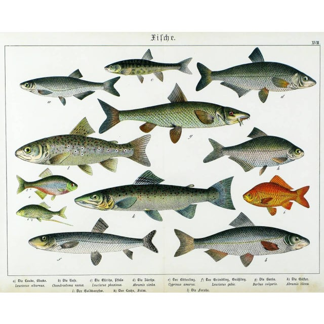 Gold Colorful Trio 1880 Schubert German Lithographs of Aquatic Life For Sale - Image 8 of 10