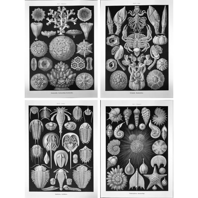 Black white shell sealife prints set of 4