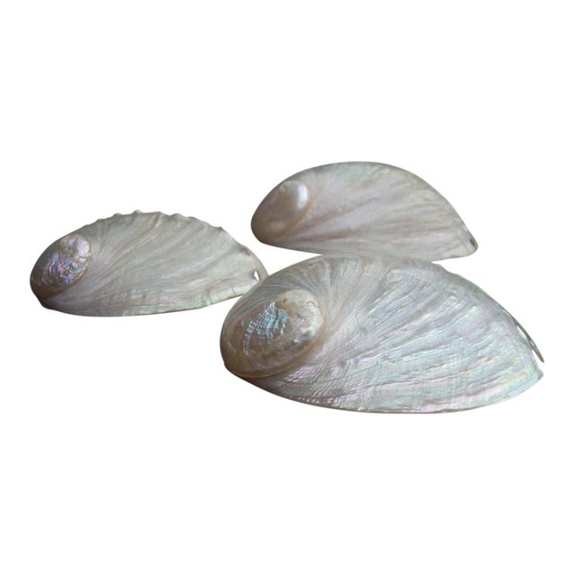 Natural Iridescent Abalone Seashells - Set of 3 For Sale