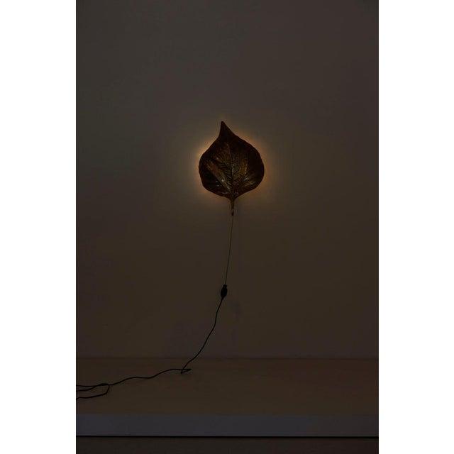1 of 4 Huge Rhaburb Leaf Brass Wall Lights or Sconces by Tommaso Barbi For Sale - Image 6 of 13