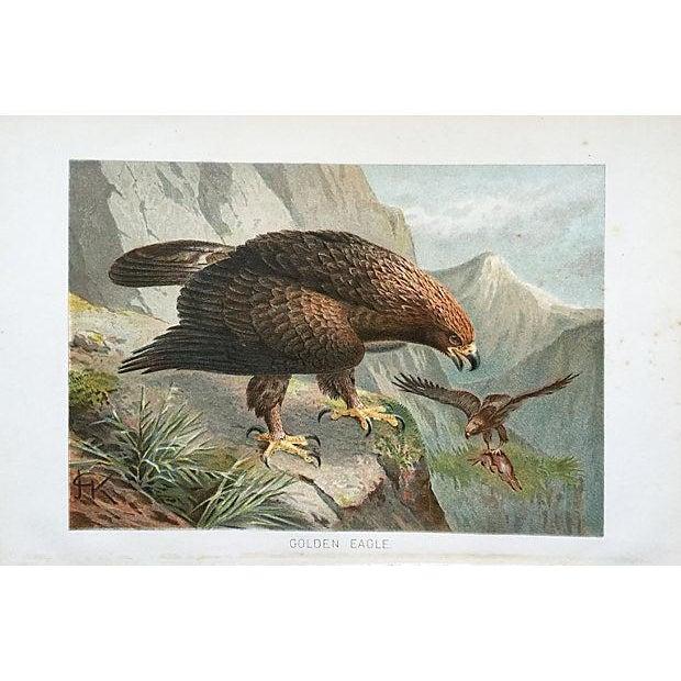 Antique Golden Eagle Lithograph, C. 1900 For Sale