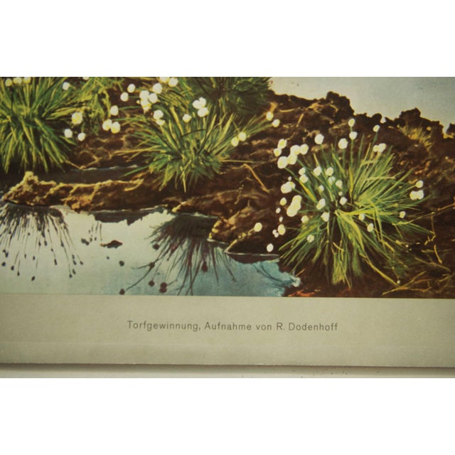 This vintage school poster depicts peat extraction. It was probably printed in the 1960s by Offsetdruckerei Fricke and...
