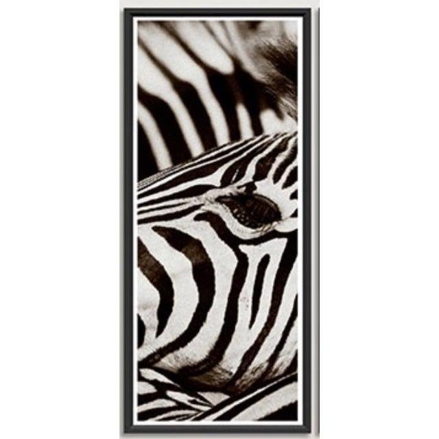"Modern Trowbridge ""Zebra"" Photo Triptych by Jamie Thorn Set of 3 For Sale - Image 3 of 7"