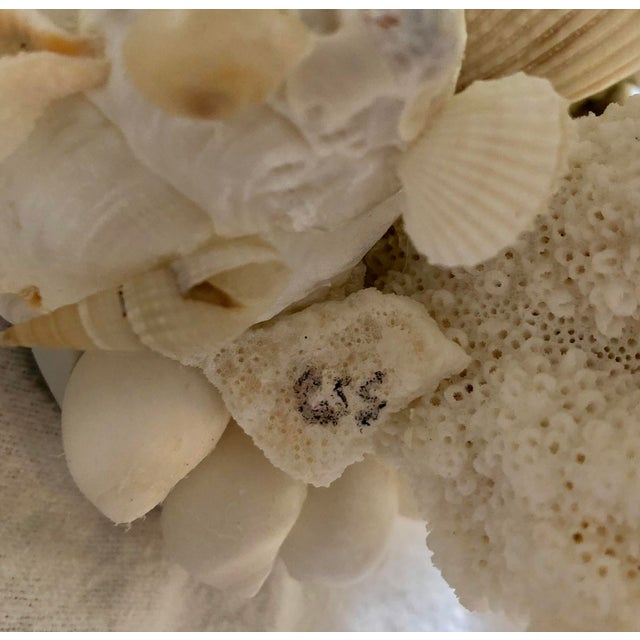Organic Modern Christa's South Seashells One-Light Coral Sconces - a Pair For Sale - Image 11 of 12