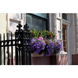 Flowers in Beacon Hill Boston For Sale