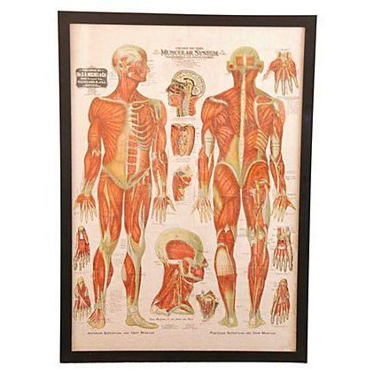Linen Antique Large Professionally Framed Linen Anatomy Muscular System Medical Chart For Sale - Image 7 of 7