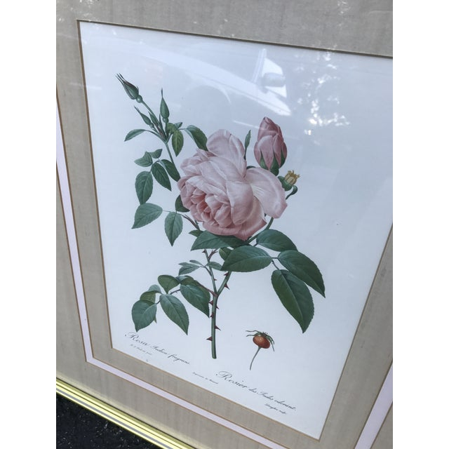 Pierre Joseph Redoute Botanical Rose Large Lithographs - a Pair For Sale - Image 4 of 8