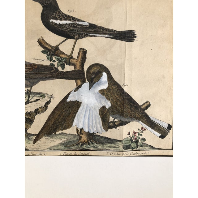 Brown 18th Century French Matted Bird Engraving by Martinet Featuring a Snow Pincer, a Senegalese Pincer and a Carolina Ortolan For Sale - Image 8 of 13
