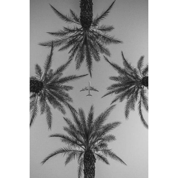 Contemporary Jason Mageau Palm Springs Plane & Palm Trees Photo For Sale - Image 3 of 3
