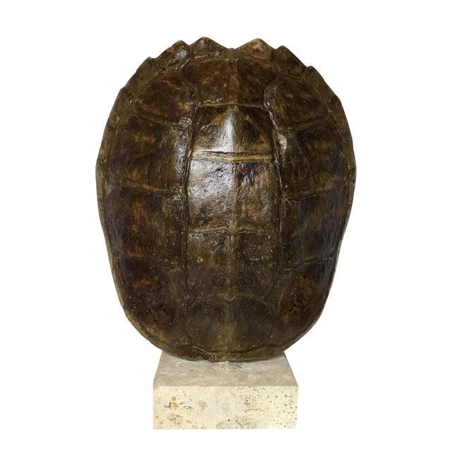 Vintage Turtle Shell on Coral Base - Image 1 of 9