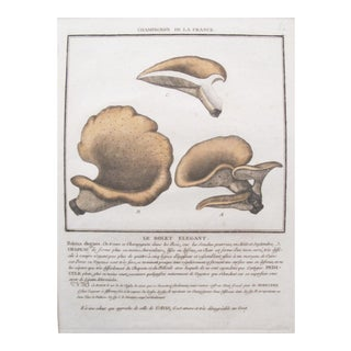 1780 French Mushroom Botanical Plate, Bolet Elegant For Sale