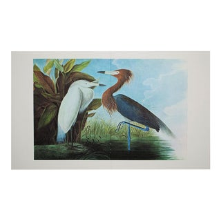 XL Vintage Lithograph of Purple Heron