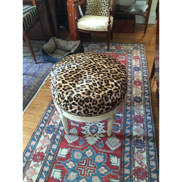 The round cream painted stool upholstered in a leopard print hide on four tapered stop fluted legs below four rosettes.