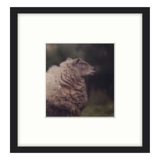 "John Nanian ""Sheep"" Framed Photo Print - Image 1 of 2"