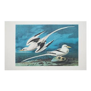 1966 XL Lithograph of White-Tailed Tropic Bird by Audubon