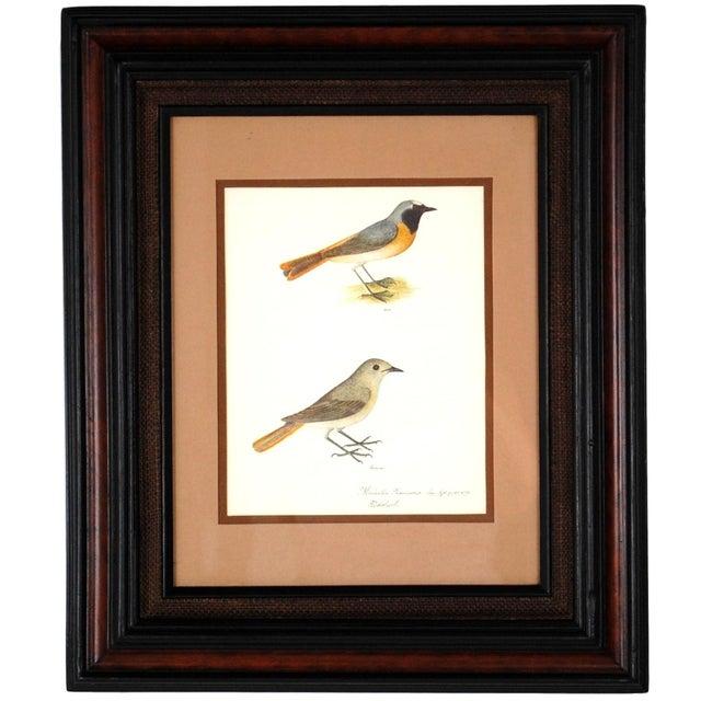 Vintage Framed Bird Prints - Set of 3 - Image 2 of 10