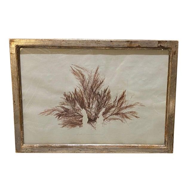 Seaweed Print For Sale - Image 4 of 4