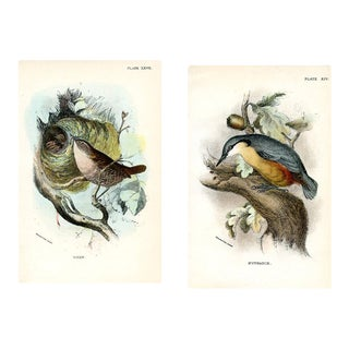 Wren and Nuthatch, 1896, Pair of Original Bird Lithographs For Sale