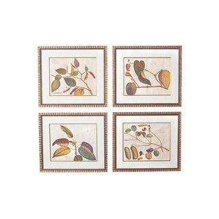 "Four 17th Century Dutch Botanical Engravings, Rheede's ""Hortus Malabaricus"" For Sale"